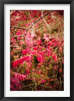 Framed Close-up of a plant in a garden in autumn, Musee de l'Ecole de Nancy, Nancy, Meurthe-et-Moselle, Lorraine, France