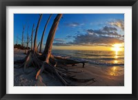 Framed Dead Trees on the Beach at Sunset, Lovers Key State Park, Lee County, Florida