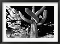 Framed Saguaro cactus, Tucson, Arizona (B&W, horizontal)