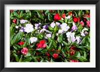 Framed Flowers in the garden at Villa Carlotta, Tremezzo, Lake Como, Lombardy, Italy