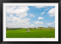 Framed Rice field, Rejasa, Penebel, Bali, Indonesia