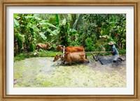 Framed Paddy Field, Rejasa, Penebel, Bali, Indonesia