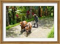 Framed Farmer with Oxen, Rejasa, Penebel, Bali, Indonesia