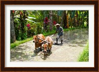 Framed Farmer with Oxen, Rejasa, Penebel, Bali, Indonesia