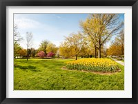 Framed Flowers with trees at Sherwood Gardens, Baltimore, Maryland, USA