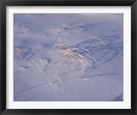 Framed Snow covered grass on South Rim, Crater Lake National Park, Oregon, USA