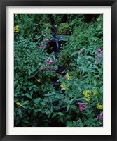 Framed Castle Crest Wildflower Garden Trail, Munson Creek, Crater Lake National Park, Oregon