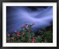 Framed Flowers on Plants, Castle Crest Wildflower Garden Trail, Munson Creek, Crater Lake National Park, Oregon