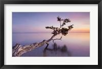 Framed Water Tree XV