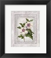 Framed Floral I