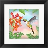 Framed Bahama Woodstar In Honeysuckle
