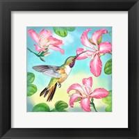 Framed Bahama Woodstar In Orchid Tree