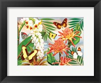 Framed Butterflies With Torch Ginger