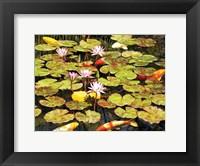 Framed Koi Pond I