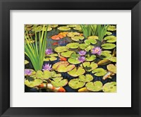 Framed Koi Pond II