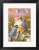 Framed Night Herons