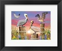 Framed Pelicans