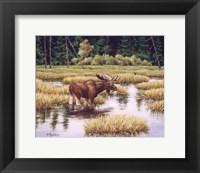 Framed Lone Bull