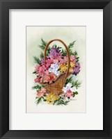 Framed Basket Of Phlox
