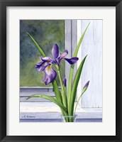 Framed Blue Flag-Wild Iris
