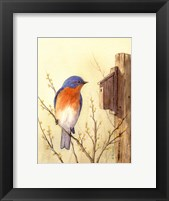 Framed Bluebird II