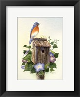 Framed Bluebird III