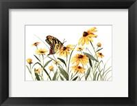 Framed Butterfly & Black Eyed Susans