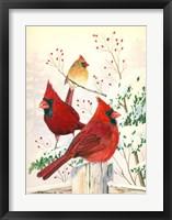 Framed Cardinals In Winter