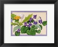 Framed Dandelion And Violets
