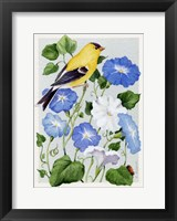 Framed Goldfinch And Morning Glories