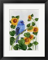 Framed Indigo Bunting And Sunflower