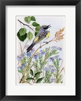 Framed Myrtle Warbler and Asters