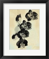 Framed Orchid Blush Panels III