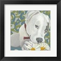 Framed Dlynn's Dogs - Patch