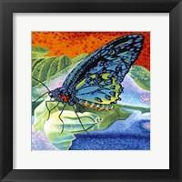 Framed Poised Butterfly II
