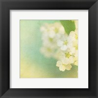 Framed White Flowers II