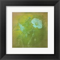 Framed White Flowers VI