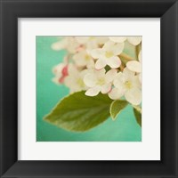 Framed White Flowers IX