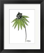 Graphic Cone Flower I Framed Print