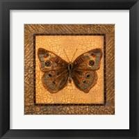 Framed Crackled Butterfly - Buckeye