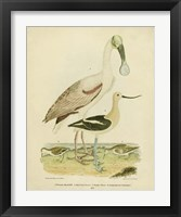 Framed Antique Spoonbill & Sandpipers