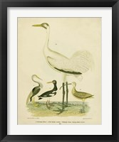 Framed Antique Crane & Heron