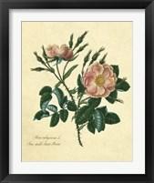 Framed Sweet Briar Rose