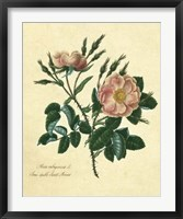 Framed Sweet Briar Rose