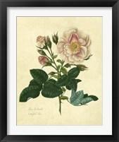 Framed Frankfort Rose