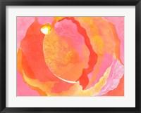 Framed Cabbage Rose I