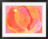 Framed Cabbage Rose I