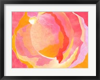 Framed Cabbage Rose III