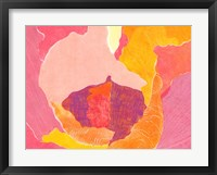 Cabbage Rose VI Framed Print