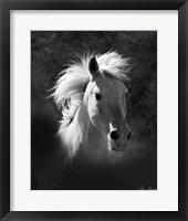 Framed Horse Portrait V